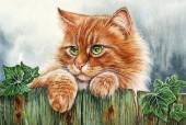 Q-K6.2 XL4029 Diamond Painting Set Cat 40x30cmQ-K6.2 XL4029 Diamond Painting Set Cat 40x30cm