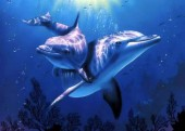 R-I6.1 X515A Diamond Painting Set Dolphins 40x30cm Round