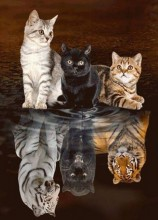 R-H3.2 X3013 Diamond Painting Set Kittens-Big Cats 40x30cm