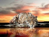 R-E6.1 S609 Diamond Painting Set Drinking Leopard 50x40cm