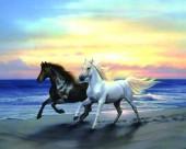 Q-C7.1  X053 Diamond Painting Set Horses 40x30cm