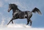S-H2.4  Q015 Diamond Painting Set Horse 30x20cm Round