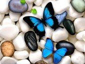 X-M4.1 Q159 Diamond Painting Set Pebbles Butterflies 30x20cm